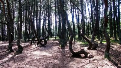 »Tanzenden Wald«