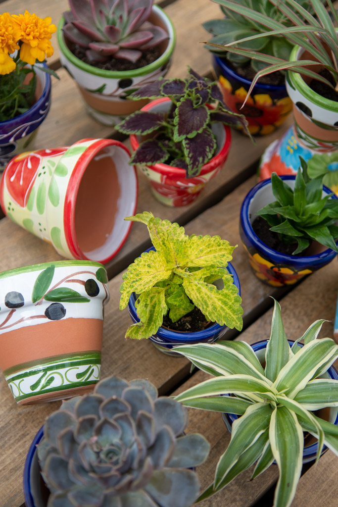 Close up product photo showing a mini still life image of an assortment of small planters