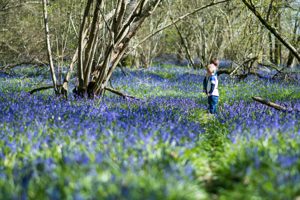 Photo of two boys walking through a bluebell wood