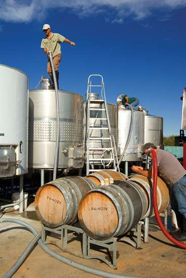 Pumping wine into barrels.