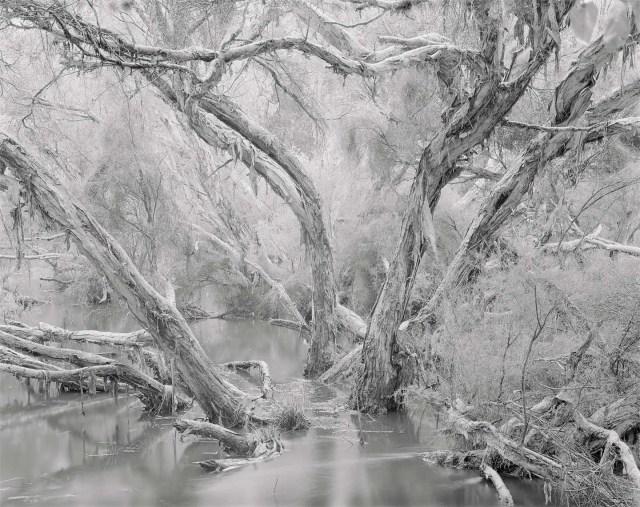 paperbarks bannister creek landscape photographer