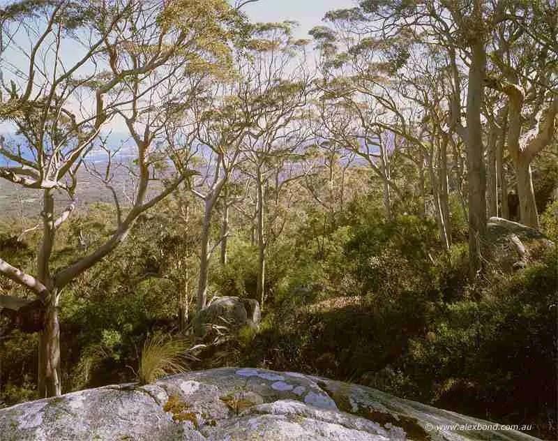 Denmark karri forest, Bibbulmun Track on Mt Hallowell