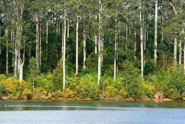 Dwarfed by karri forest Big Brook Dam Pemberton