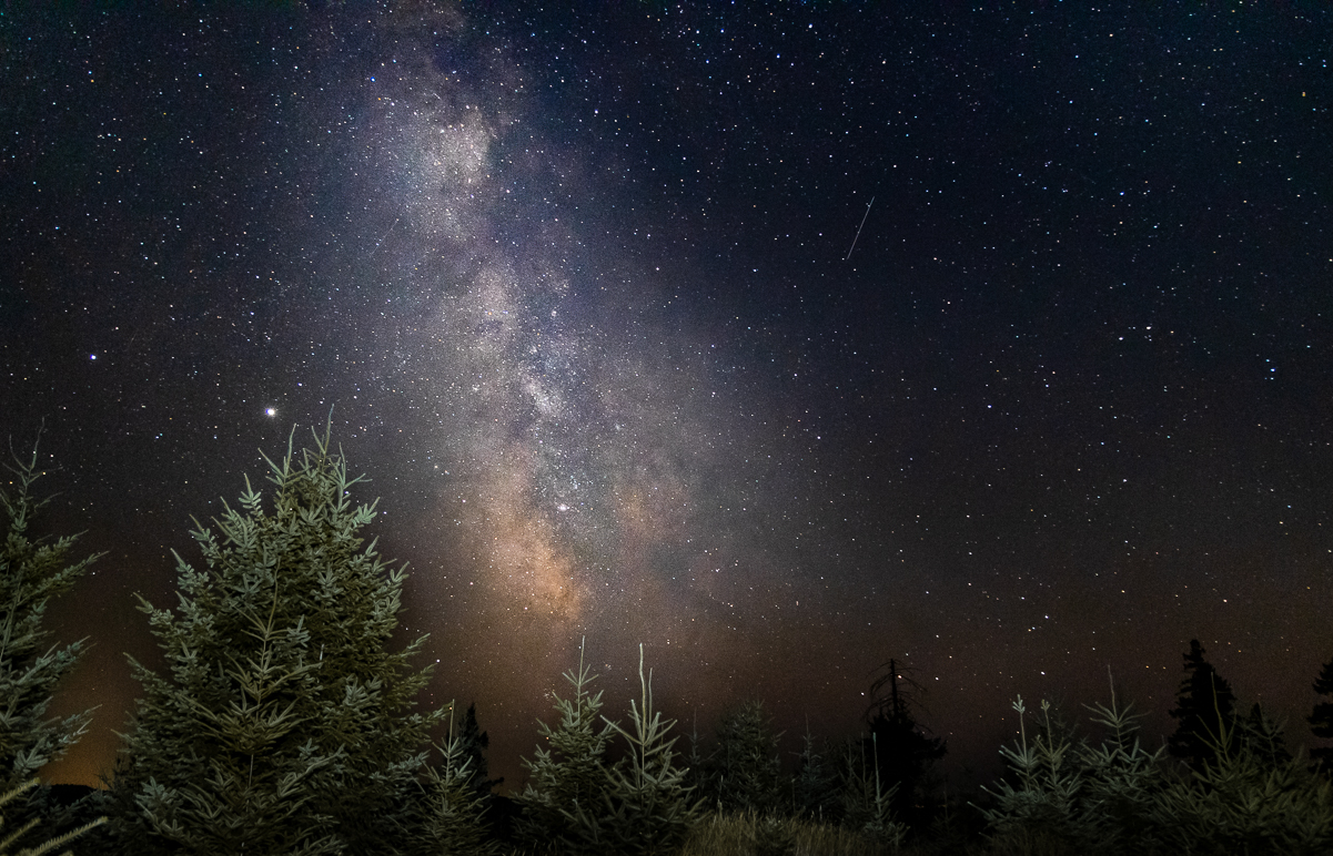 Milky Way galaxy with pine trees in the foreground.