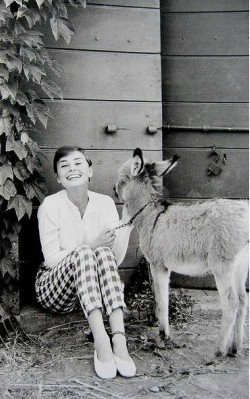 Audrey Hepburn spring/ style cropped trousers/ capri pants, white shirt and flats at home - shop the look
