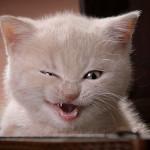 pisica-rea.jpg