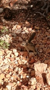 23 - Squirrel @Bryce Canyon