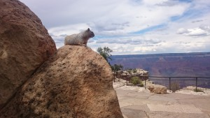 Nice View from Grand Canyon