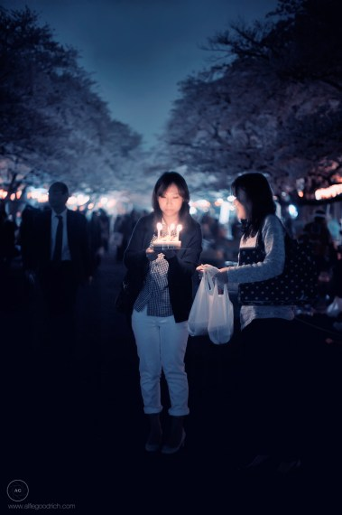 sakura2013-ueno_ALF0465bsm