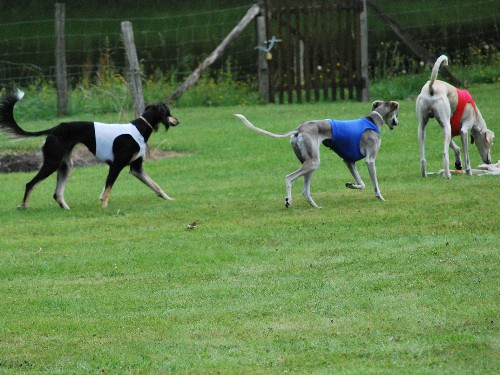 coursing1