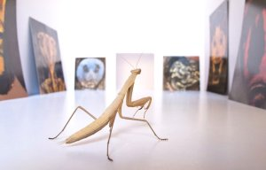 mantis-jordi-abello-09