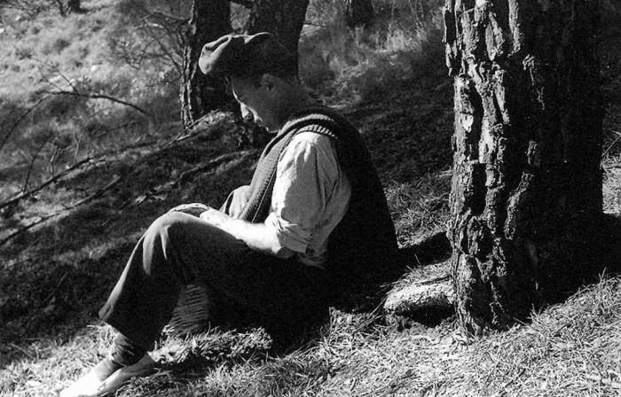 Josep-Fuster-arbre