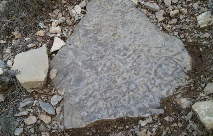 4-Calc+ária amb algues Muschelkalk3 foto Montse Caballero