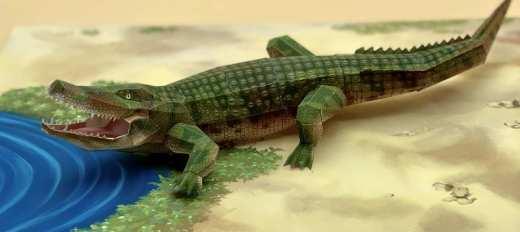 Coccodrillo - Africa