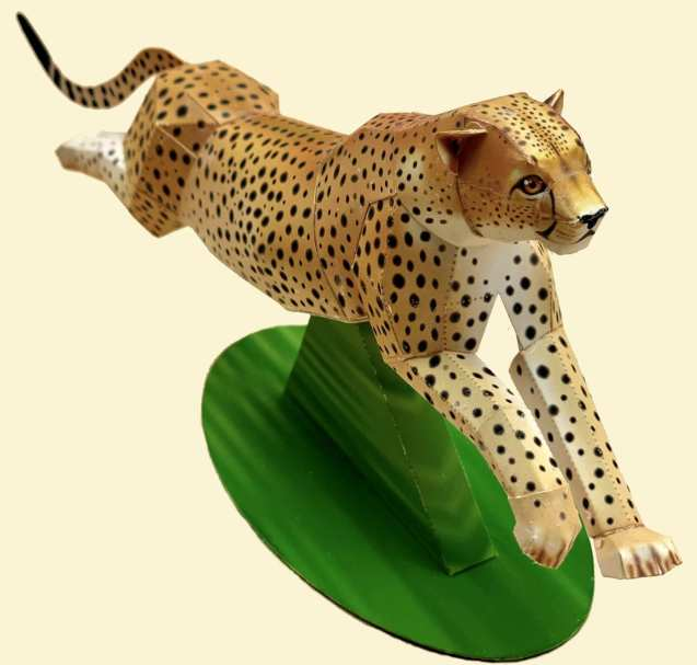 Ghepardo in corsa - Africa