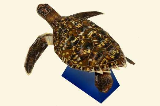 Tartaruga di mare - Marini