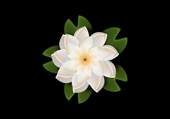 White Lotus Wallpaper  Alfreedo free graphics download