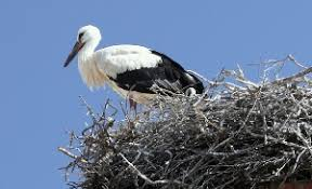 storks algarve