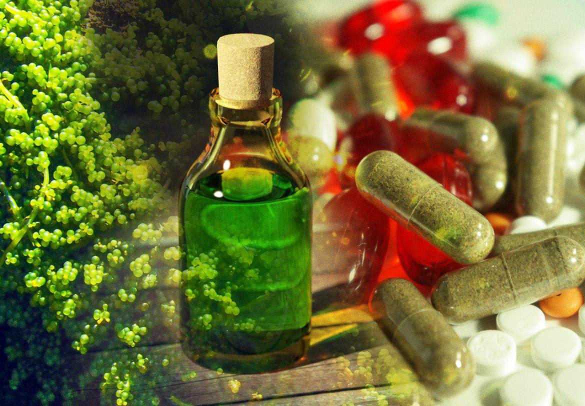 photo of algae, chemicals and medicine
