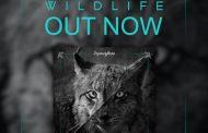 El nuevo disco de Inyourface «Wildlife» ya está disponible