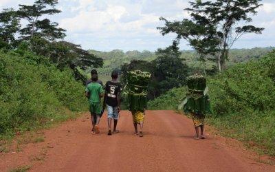 MARFIL: LA LUCHA EN LA RESERVA DE NOUABALÉ-NDOKI (Con la ONG WCS)