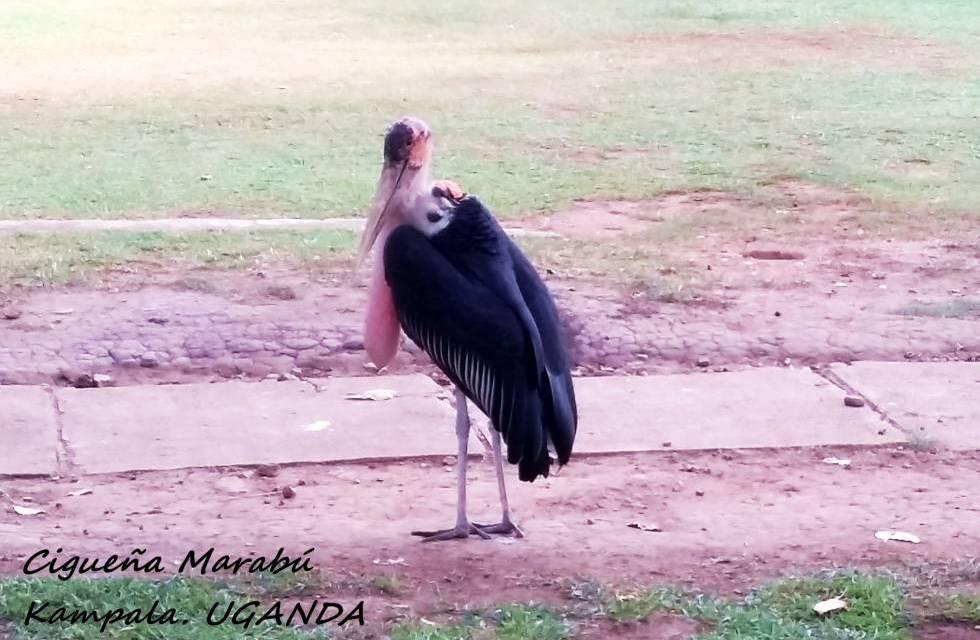 Kampala Salvaje (África no es un país #9)