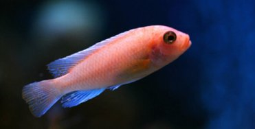 Image result for freshwater fish