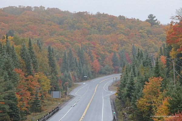 Fall Colour Report Algonquin Provincial Park