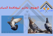 Photo of شركة مكافحة حمام بخميس مشيط