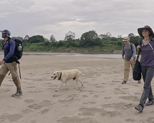 Cruzando el Amazonas - Docureality - Tres exploradores y deportistas extremos atraviesan la selva colombiana llevando consigo el mínimo de elementos, aprendiendo de las tradiciones de las comunidades del lugar y dependiendo del entorno para sobrevivir.