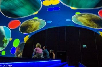 Exposición Oceans