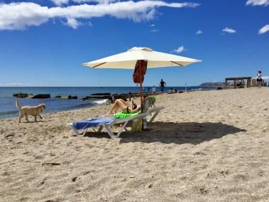 playa agua amarga dogfriendy (1)