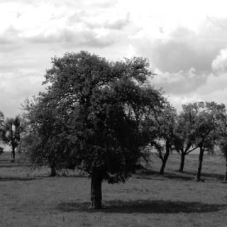 Monochrome Landschaft