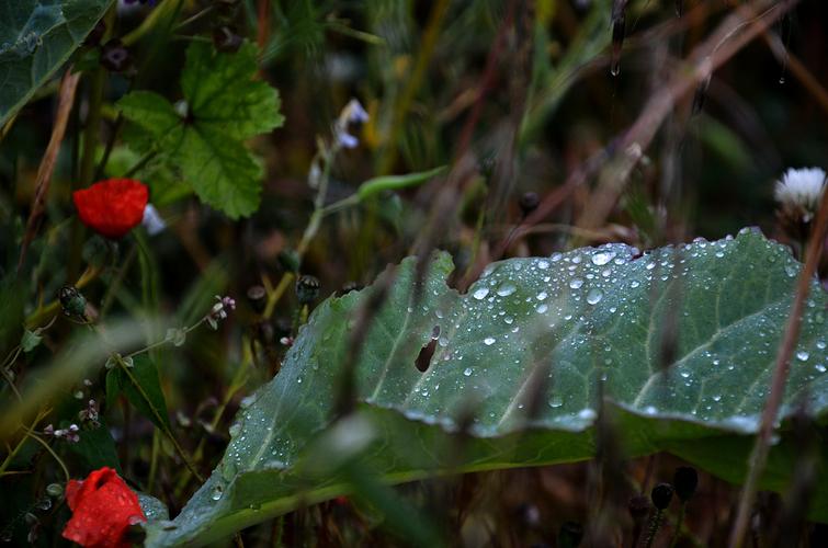 Perlen im Feld