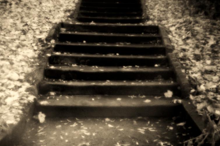 Herbsttreppe [HolgaLens]