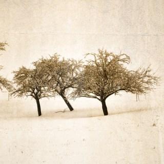 WinterBäume [4]