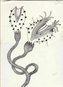 Fleurs de Barbarie /Alice Heit