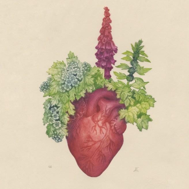"""""""les plantes du coeur"""" imprimées sur papier Fabriano, pointe sèche."""