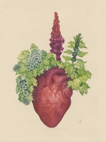 les plantes du coeur