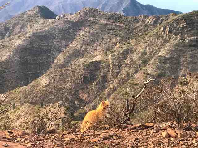 hiking mount teide tenerife alice morrison whereabouts holidays