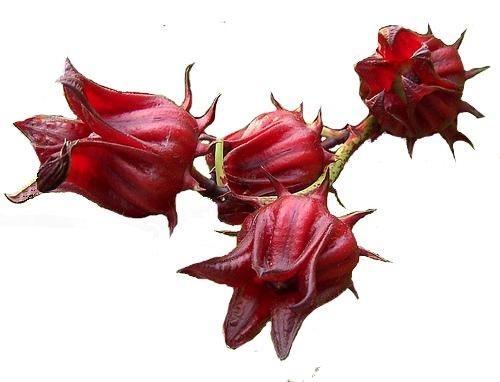 le bissap ( fleurs d'hibiscus) - alice pegie cuisine