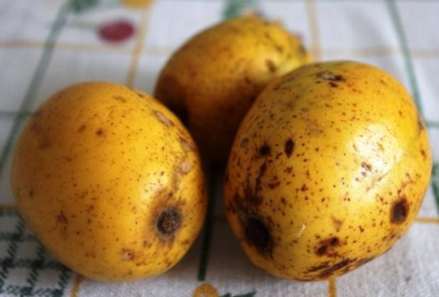 cassiamanga