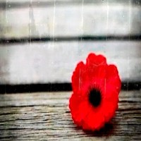 O que é Remembrance Day e como é comemorado no Canadá
