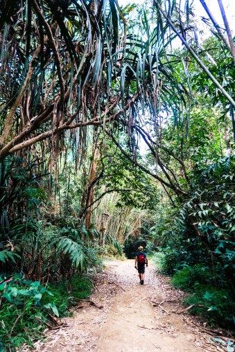 Parc-National-de-khao-Sok