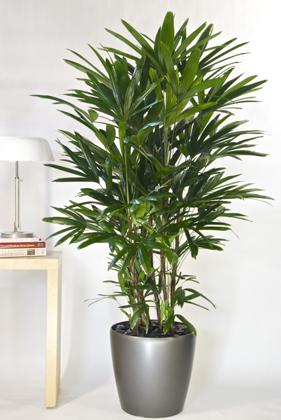 Benefits of Houseplants and How to Choose One - Alicia In A ... on invertebrates names, some plants names, fungi names, animals names, indoor plants and their names, fish names, part of plants names, classification of plants names, sahara desert plants names, mosquito repellent plants names,