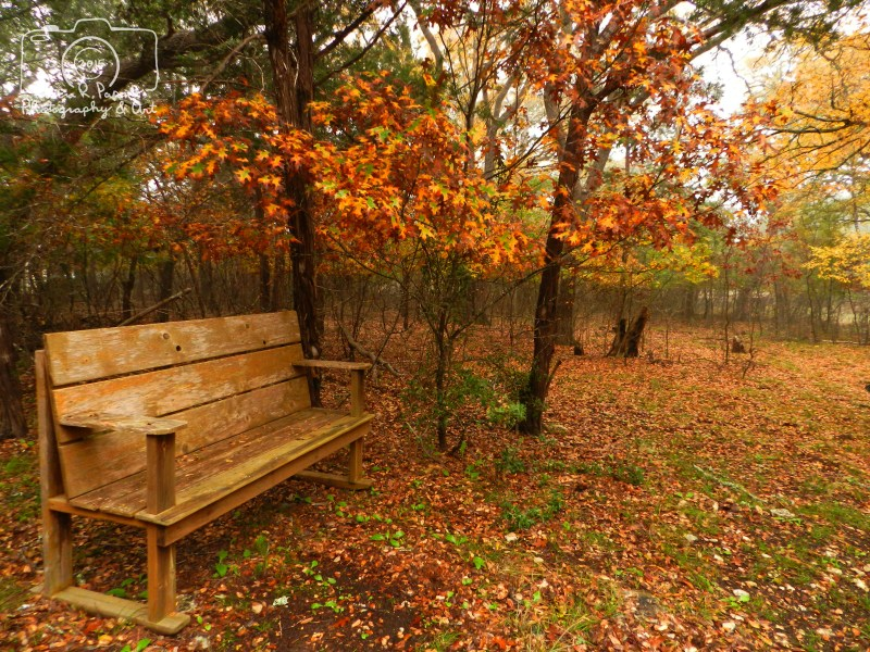 Bench in The Woods - 121115