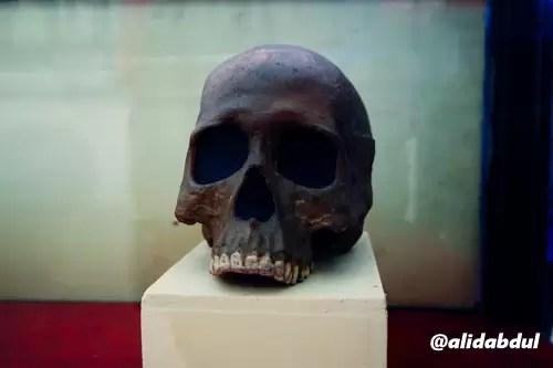 Museum Trinil Alid (6)