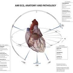 Coronary Anatomy Diagram Maxon Hydraulic Pump Wiring Paucis Verbis: Ami And Ecg Geography