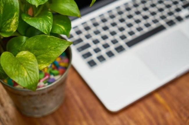 WFH plant on desk