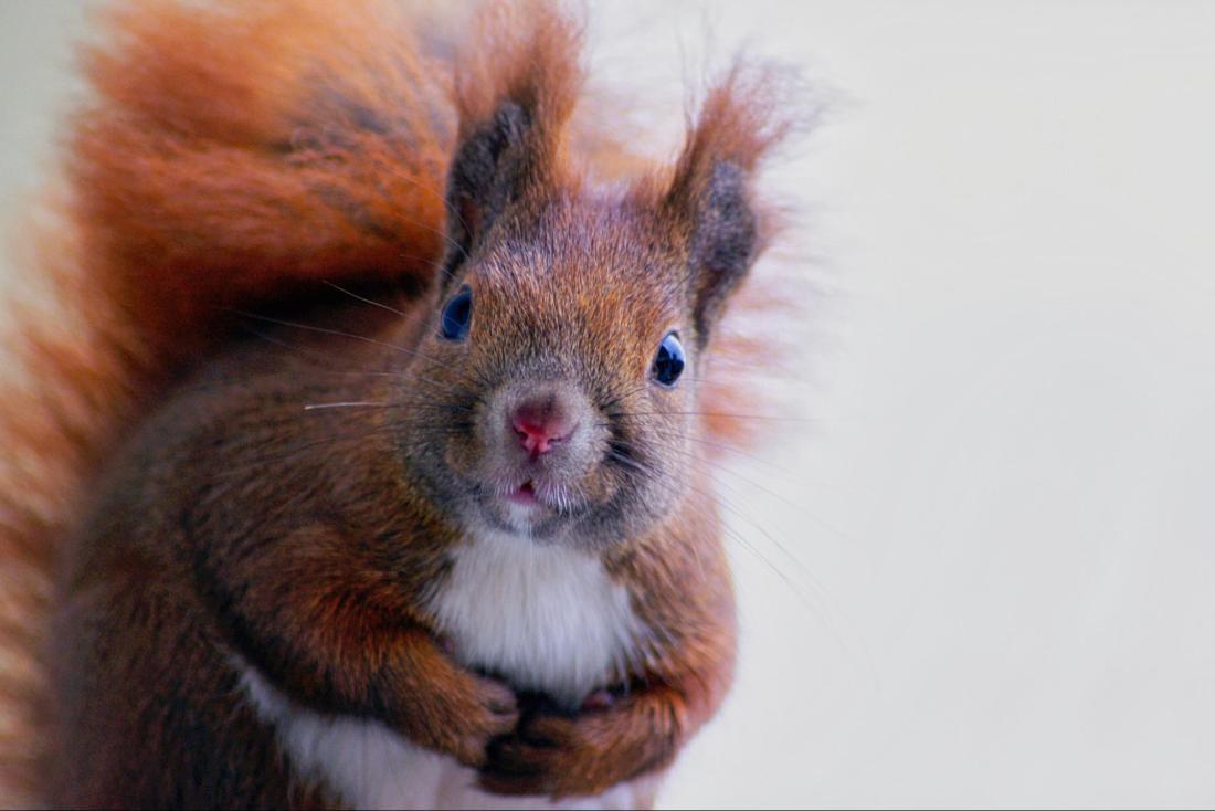 squirrel distractions